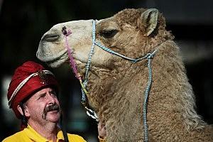 camel milk next new craze