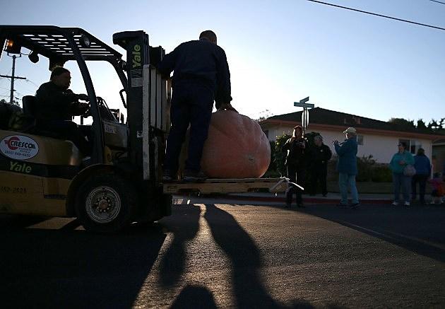Annual Heavyweight Pumpkin Contest Held In Half Moon Bay